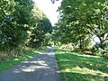 Country lane near Holme on the Wolds - geograph.org.uk - 58385.jpg
