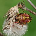 Creepy crawlies 2012 Wanderung nach Künzelsau (7728016390).jpg