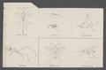 Cremastus - Print - Iconographia Zoologica - Special Collections University of Amsterdam - UBAINV0274 046 02 0010.tif