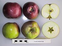 Cross section of Black McIntosh (EM), National Fruit Collection (acc. 1952-016).jpg