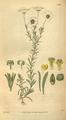 Curtis's Botanical Magazine, Plate 3108 (Volume 58, 1831).png