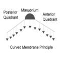 Curved membrane principle.png