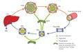 Cycle du cholestérol.pdf