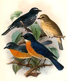 (lower two birds)
