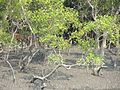 DEER IN A JUNGLE IN SUDARBON.jpg