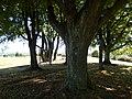DIE EICHEN AUF DEM GALGENBUCK 3.9.2013 - panoramio.jpg