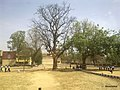 DRIED MAHUA TREE IN THE PLAYGROUND OF KV JAMUNA COLLIERY. - panoramio.jpg
