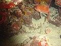 DSC00216 - peixe - Naufrágio e recifes de coral no Nilo.jpg