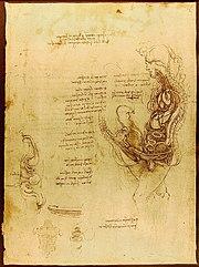 Vue en coupe schématique d'un coït vaginal (Léonard de Vinci)