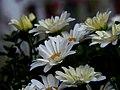 Daisy Garden.jpg