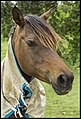 Dayboro horse waiting for Ben with carrots-1 (22855709582).jpg