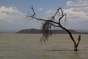 Dead tree in Lake Baringo, Kenya - by Ferdinand Reus.jpg