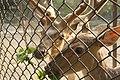 Deer Park Two Deer Eating.jpg