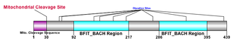 Acyl-CoA thioesterase 9 - Depiction of ACOT9 gene