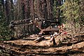 Deschutes National Forest, timber salvage logging (36951214581).jpg
