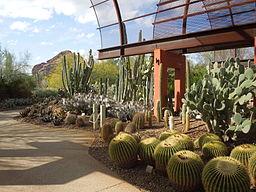 Desert Botanical Garden Phoenix Arizona 51