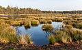 Diakonievene. Natuurgebied van It Fryske Gea 16.jpg