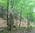 Dilijan National Park, Path way to Aghavnavank 33.jpg