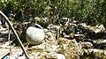 Dinopark, Funtana, Croatia (dinopark.hr) - panoramio (22).jpg