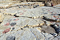 Dinosaur tracks in Courtedoux, Switzerland 06.jpg