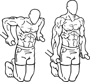 Tricep Dips Chest Dips The Big Difference further Best Leg Exercises For Bodybuilding besides Stock Photos Bodybuilding Powerlifting Vector Illustration Image38509453 additionally ment Muscler Ses Triceps Avec Des Halteres also Bent Over Two Arm Long Bar Row. on biceps workout for men