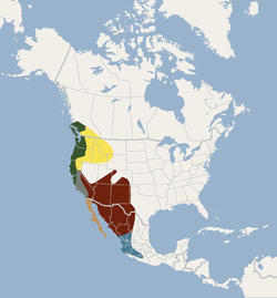 Distribution of Myotis yumanensis.png