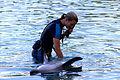 Dolphin Cove 35.jpg