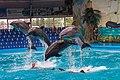 Dolphin show in Kyiv, Ukraine.jpg