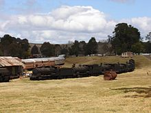Dorrigo Steam Trains.JPG