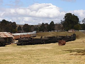 Dorrigo Steam Railway and Museum - Image: Dorrigo Steam Trains