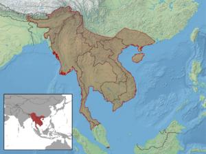 Draco maculatus - Image: Draco maculatus distribution