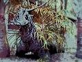 Dragon alert - panoramio.jpg