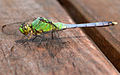 Dragonfly ran-139.jpg
