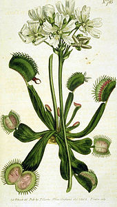 Venus flytrap wikipedia illustration from curtiss botanical magazine by william curtis 17461799 ccuart Choice Image