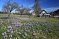 Drebacher Krokuswiesen 2H1A6385WI.jpg