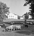 Drottningholm - KMB - 16001000018395.jpg