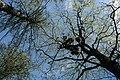 Duderhof Heights - Rooks' Nests.jpg