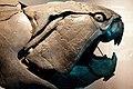 Dunkleosteus profile.jpg