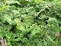 E.V.A. LanxmeerEcological gardens 2009.jpg