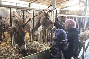 Donkey milk - Image: E4t 5hw 45