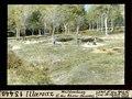 ETH-BIB-Illarsaz, Waldrodung, Osten des Thone-Dammes-Dia 247-13440.tif