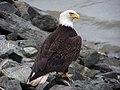 Eagle Rocks (5463830574).jpg