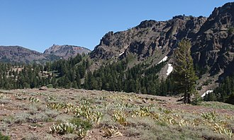 Ebbetts Pass - Subalpine meadow at Ebbetts Pass