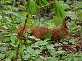 Eichhörnchen12.jpg