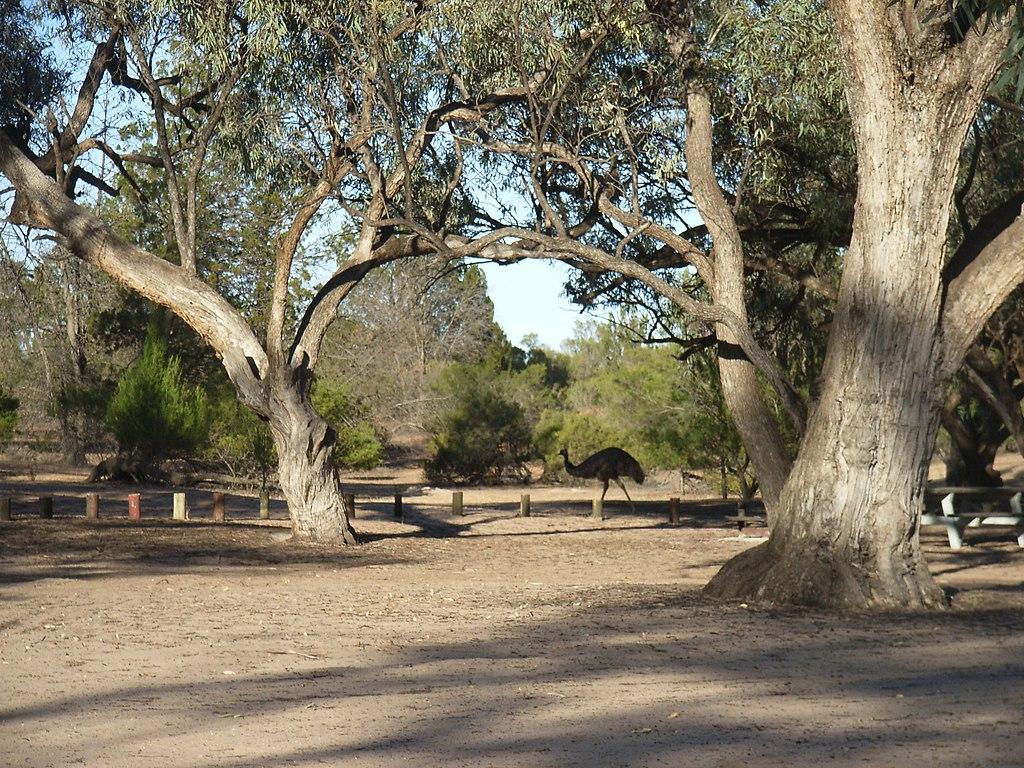 Emu Hattah Lakes