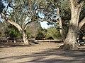 Emu Hattah Lakes.JPG