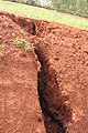 Erosion after one heavy rainfall (6908576155).jpg