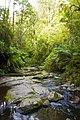 Erskine Falls Lorne Victoria - panoramio.jpg