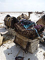 Ethiopie-Exploitation du sel au lac Karoum (22).jpg