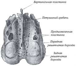 Ethmoid bone above.png
